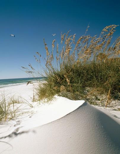 Stock Photo: 2016-336 Panama City Beach Florida USA