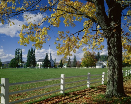 Stock Photo: 2021-520196 Tree near a fence, Craftsbury, Vermont, USA