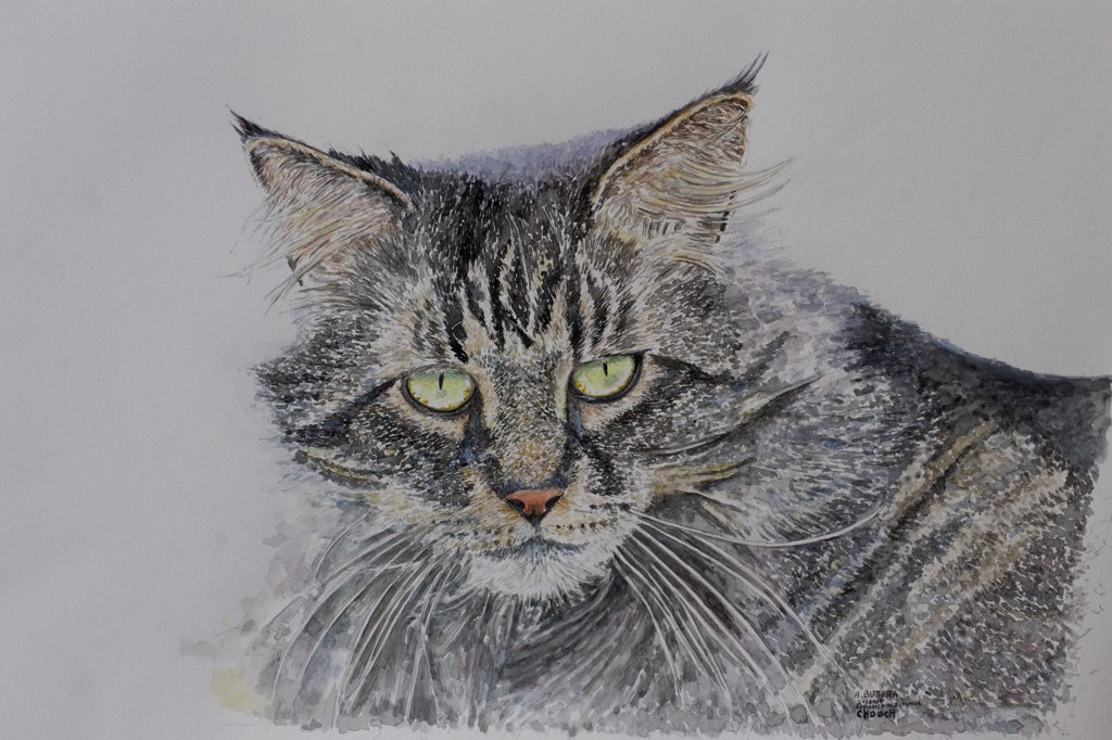 Stock Photo: 2026-602421 Painting of a cat