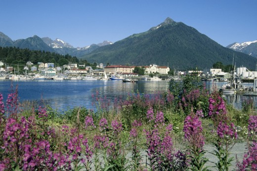 Stock Photo: 2032-1752 Sitka