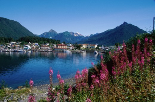 Stock Photo: 2032-1801 Sitka