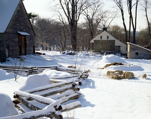 Stock Photo: 2050-601466 USA, New York, Tarrytown, Philipsburg Manor, farm with sheep's in winter