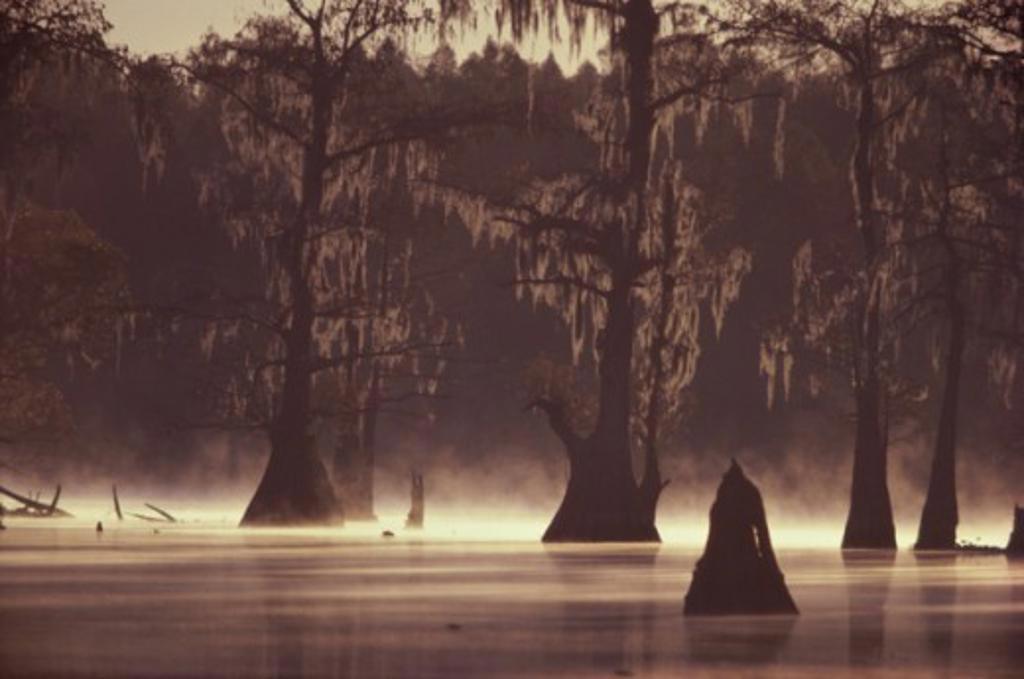 Stock Photo: 2104-136 Atchafalaya Bayou Louisiana USA