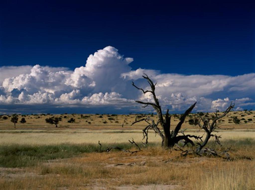 Stock Photo: 2106-1584 Panoramic view of Kalahari Gemsbok National Park, South Africa