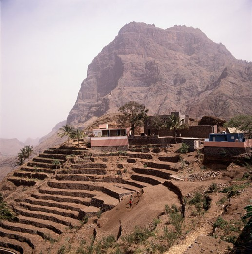 Stock Photo: 2106-810 Terrace Farming