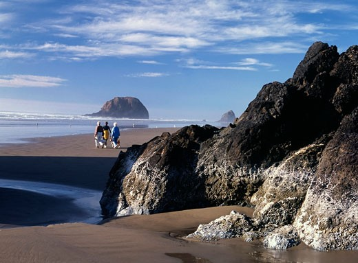 Rear view of three people walking on the beach, Arcadia Beach, Oregon, USA : Stock Photo