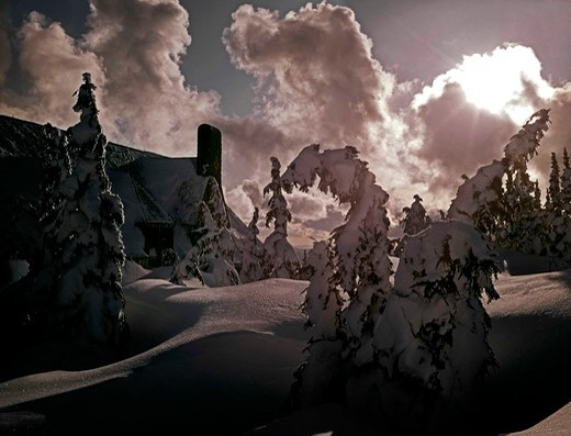 Stock Photo: 2109-2148 Trees on a snow covered hill, Timberline Lodge, Mt Hood, Oregon, USA