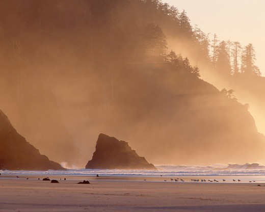 USA, Oregon, Cascade Head at sunset : Stock Photo
