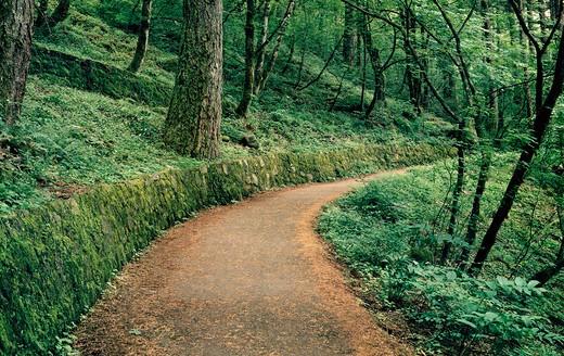 USA, Oregon, Columbia Gorge National Scenic Area, Trail to Wahkeena Falls : Stock Photo