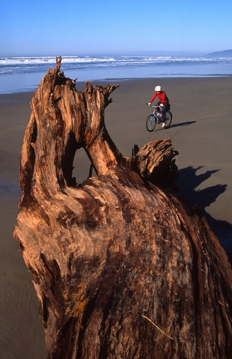 USA, Northern Oregon coast near Manzanita, Cyclist on beach : Stock Photo