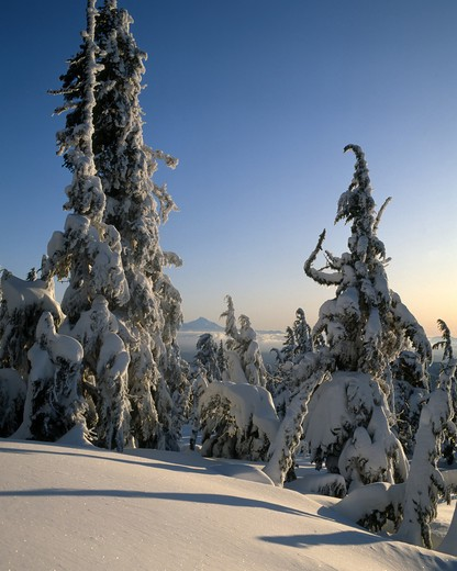Stock Photo: 2109R-601720 USA, Oregon, Winter scene from south side of Mt. Hood, Mt. Jefferson in distance