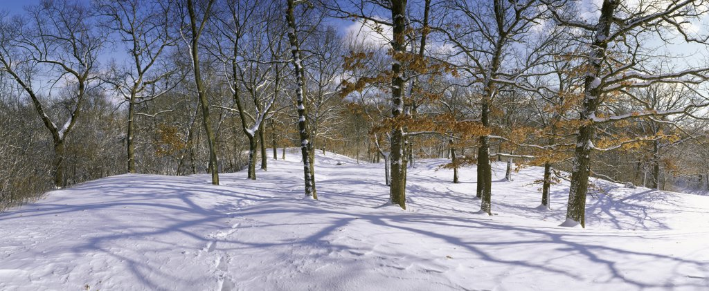 Winter Four Season Set : Stock Photo