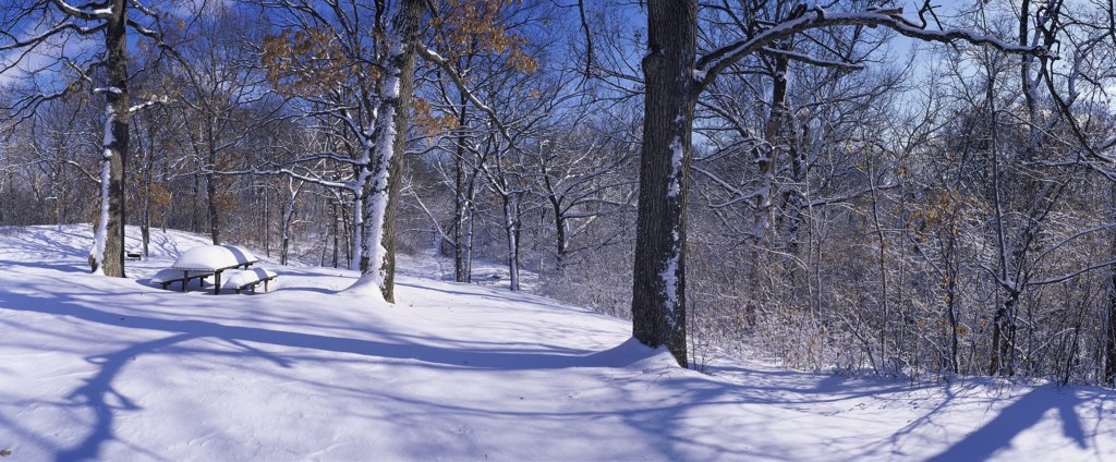 Stock Photo: 2117-205A Winter