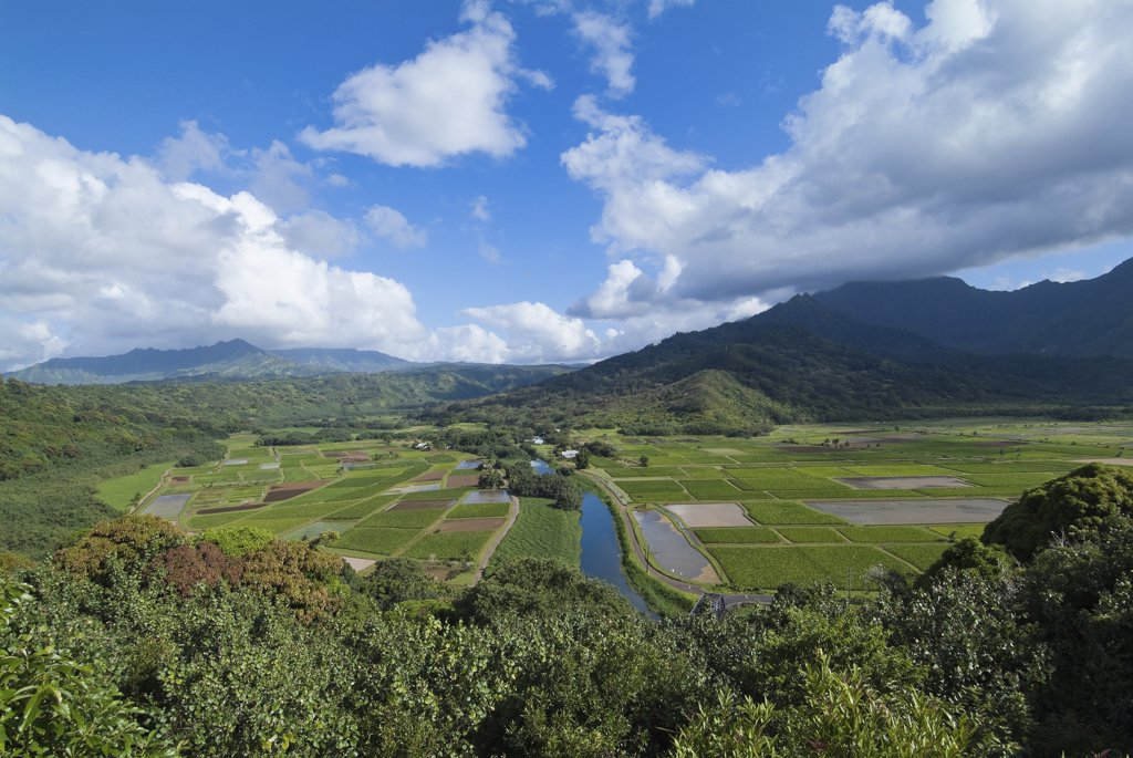 High angle view of taro field, Hanalei Valley, Kauai, Hawaii, USA : Stock Photo