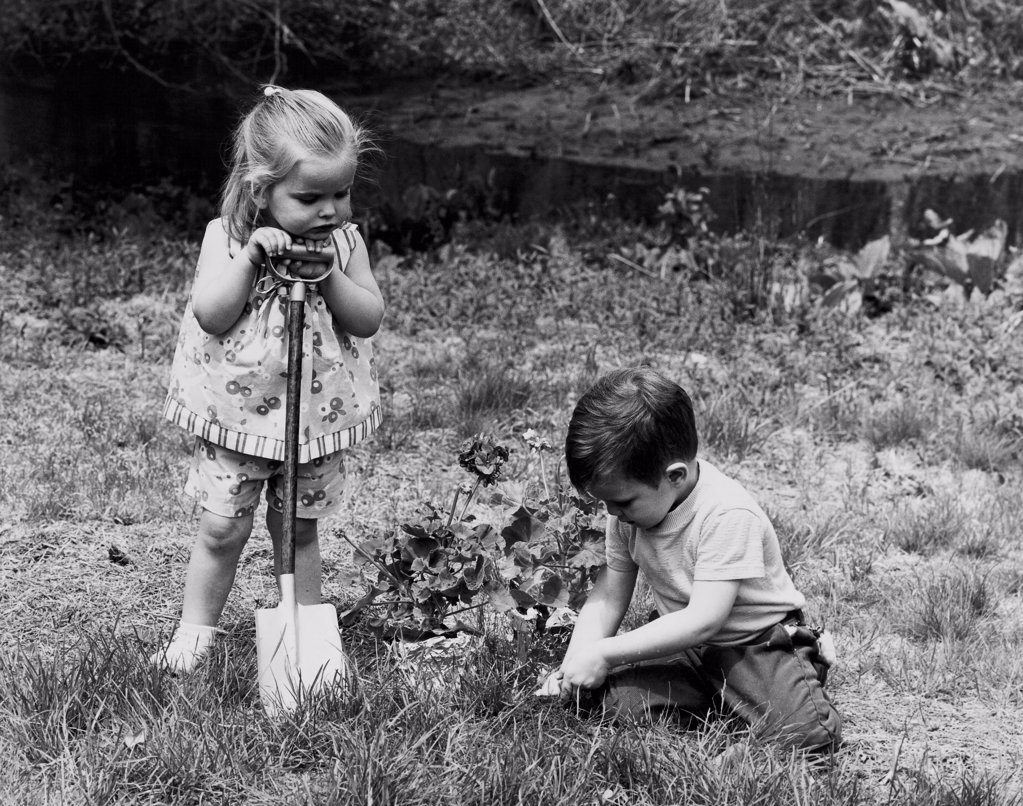 Stock Photo: 255-14852 Boy planting a plant in a lawn with a girl standing beside him