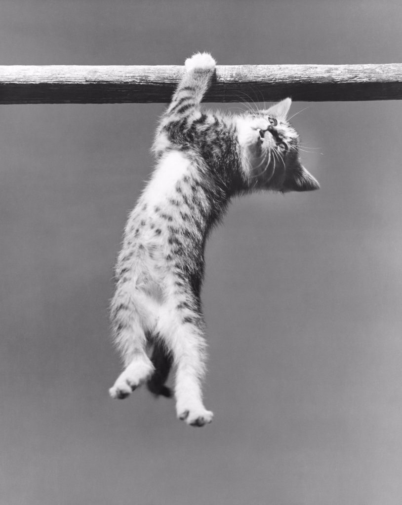 Low angle view of a kitten hanging on a pole : Stock Photo