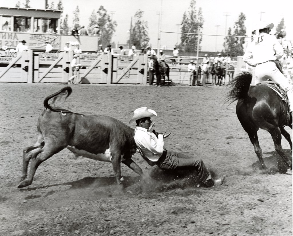 Stock Photo: 255-21955 Two cowboys performing in rodeo