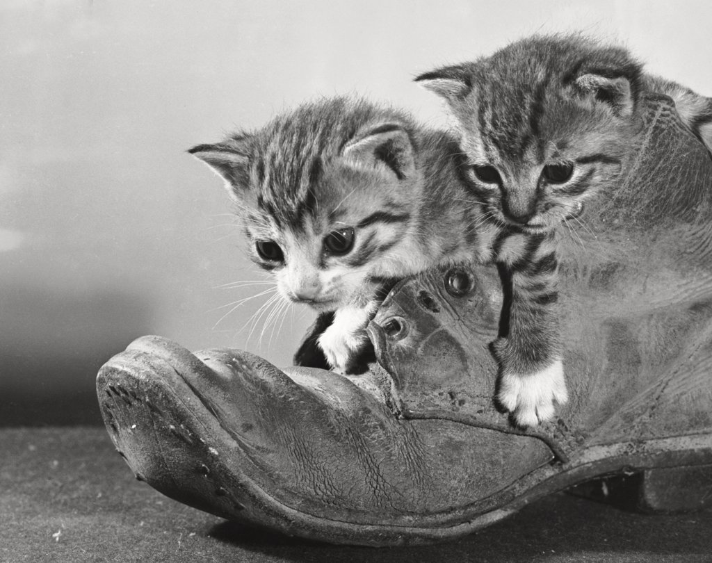 Two kittens and an old boot : Stock Photo