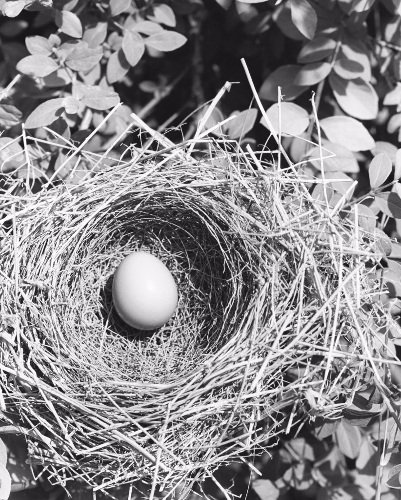 High angle view of an egg in a bird's nest : Stock Photo