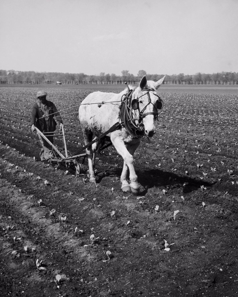 Stock Photo: 255-30681 Horse plowing a field