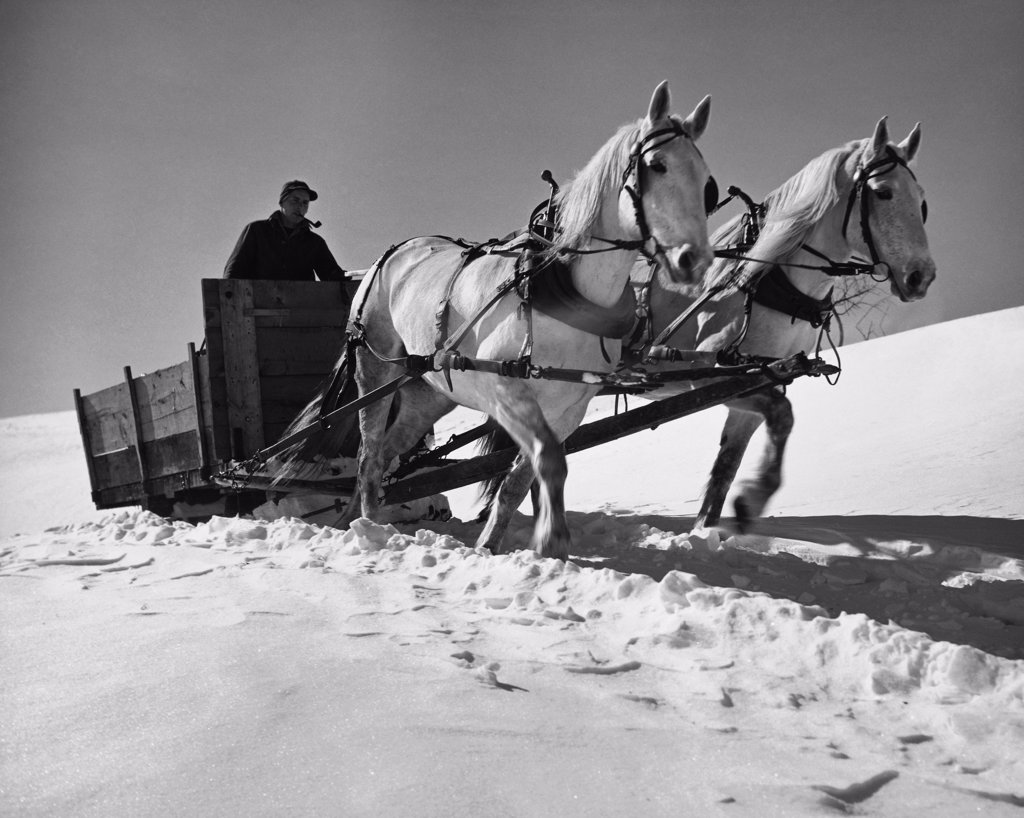 Stock Photo: 255-31748 Man sitting on a sled pulled by two horses on snow