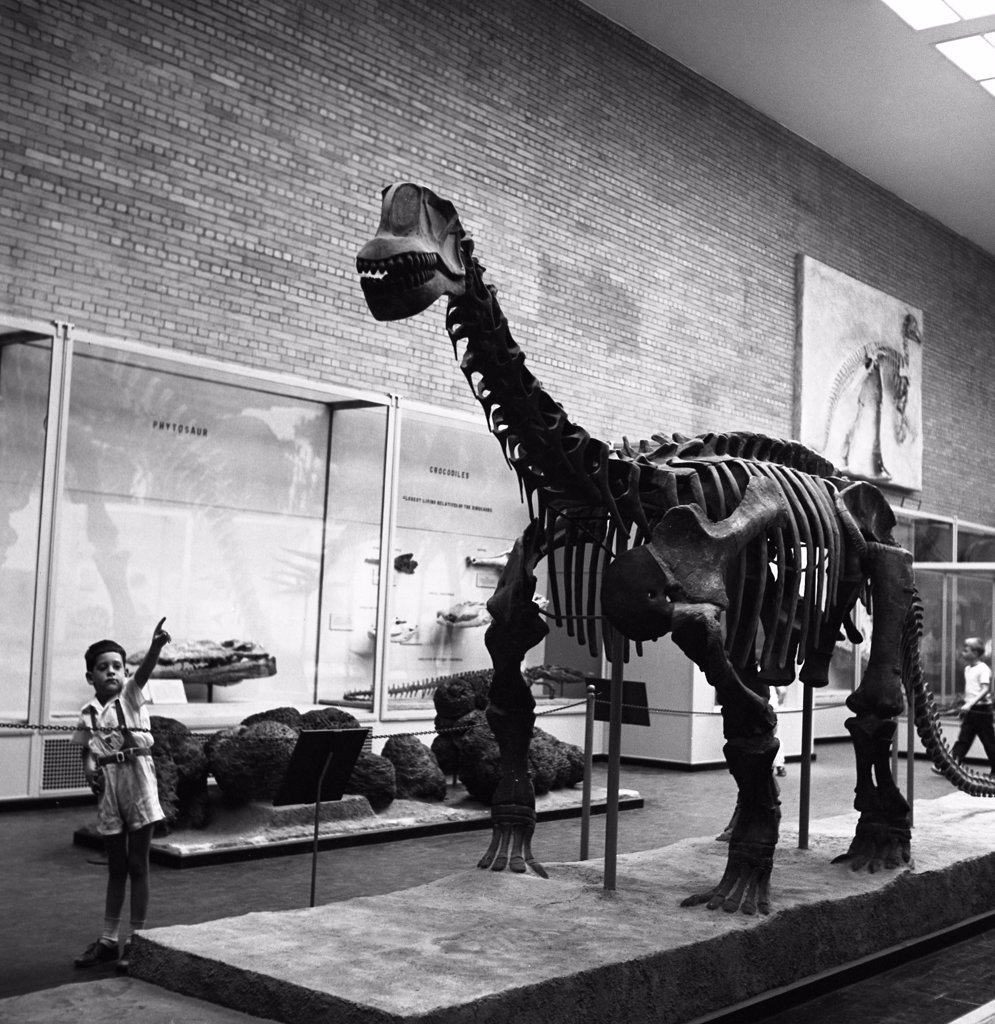 Museum of natural history : Stock Photo