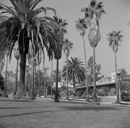 Stock Photo: 255-418521 USA, California, Los Angeles, Beverly Hills Street scene