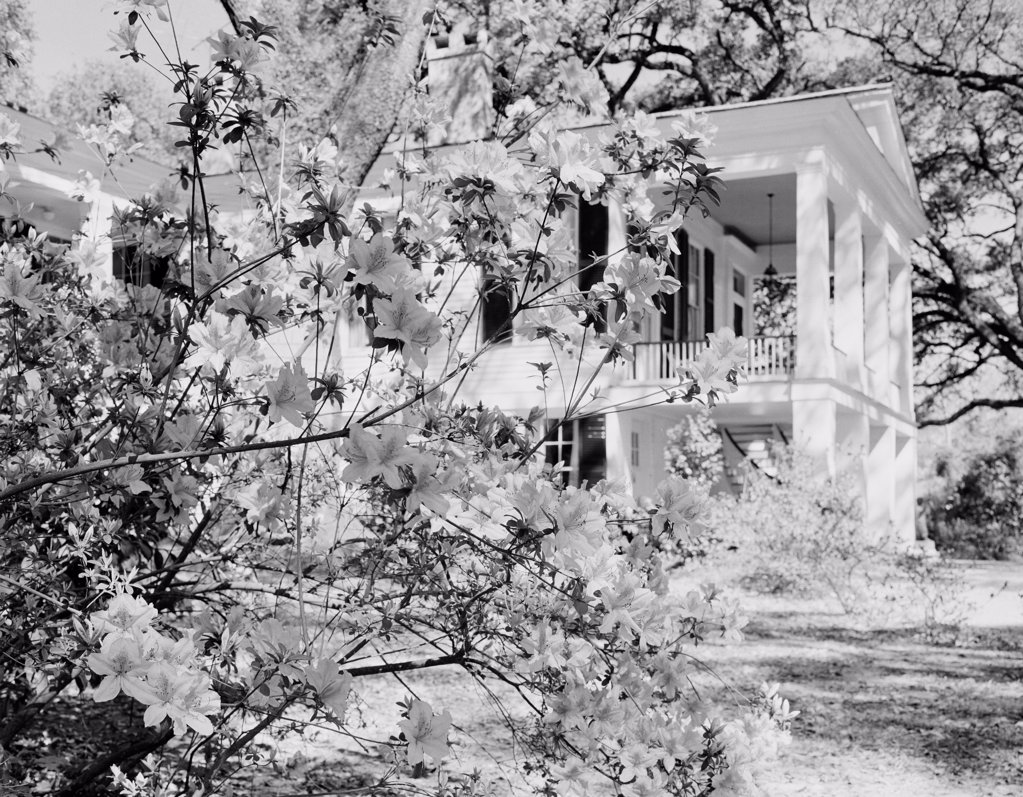 USA, Alabama, Mobile, Oakleigh House Museum, View on museum's building through blossoming bush : Stock Photo