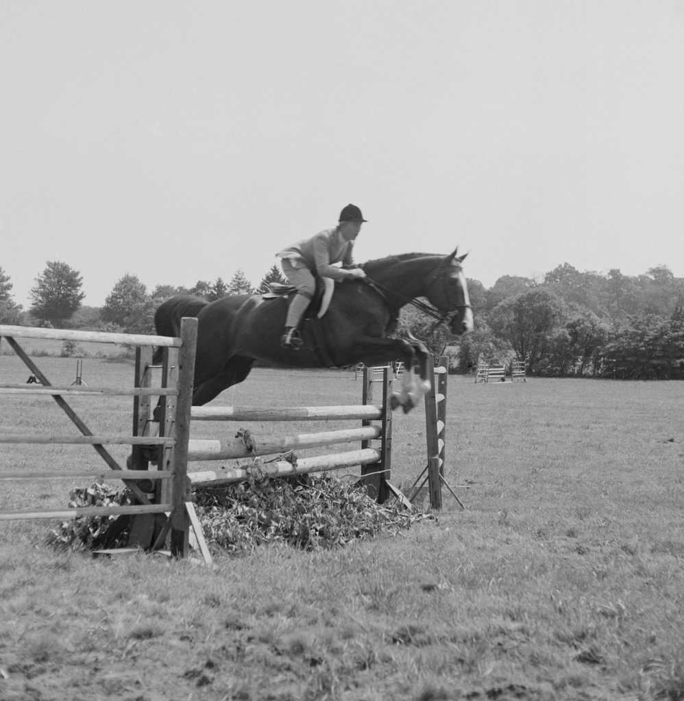 Stock Photo: 255-422360 Jockey riding horse through obstacle course