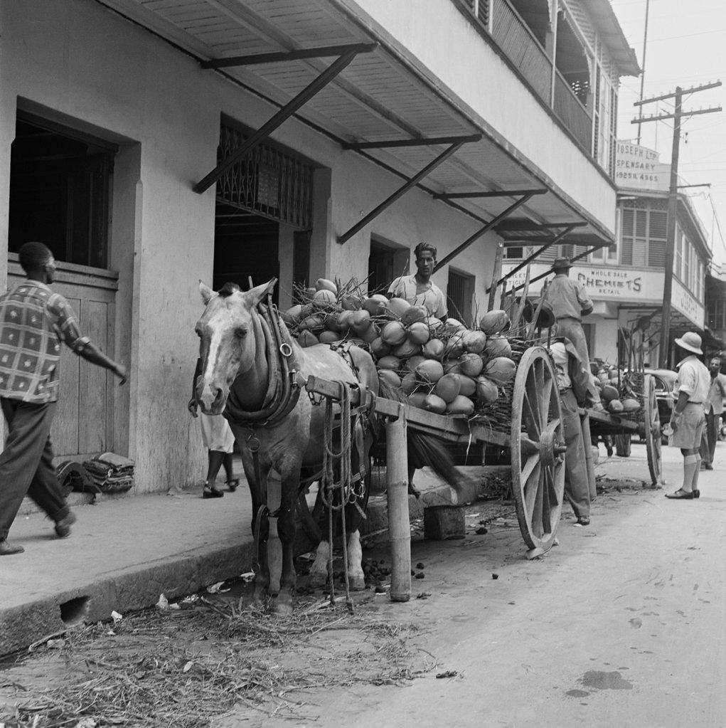 Stock Photo: 255-424206 Trinidad and Tobago, Trinidad, Coconuts on horsedrawn carts
