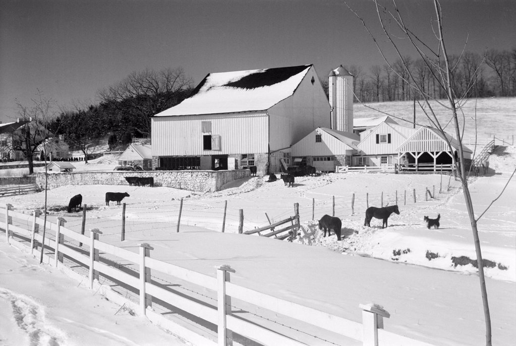 Stock Photo: 255-424493 USA, Pennsylvania, farm in winter