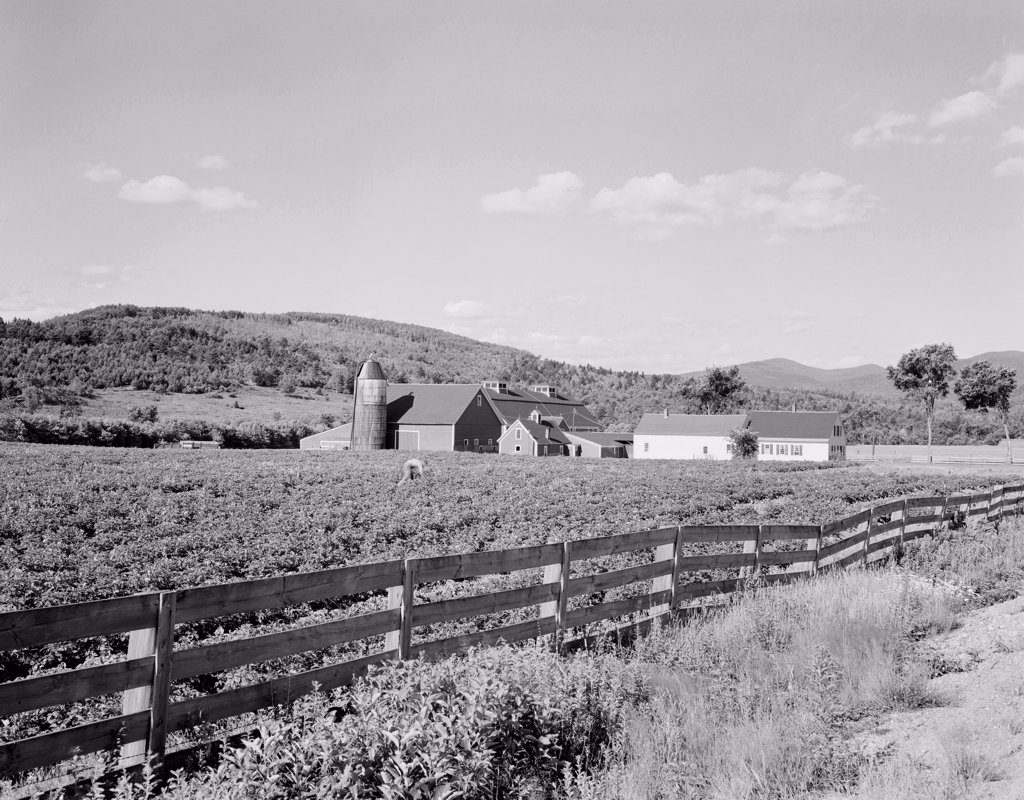 Stock Photo: 255-424778 USA, Vermont, Guildhall, Farm view with plank fence and field of potatoes