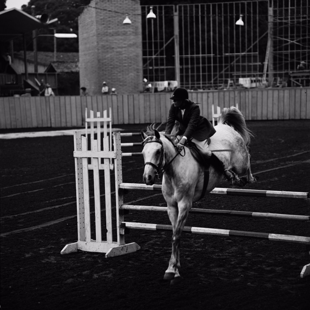 Stock Photo: 255-424918 Horse and rider at show jumping event