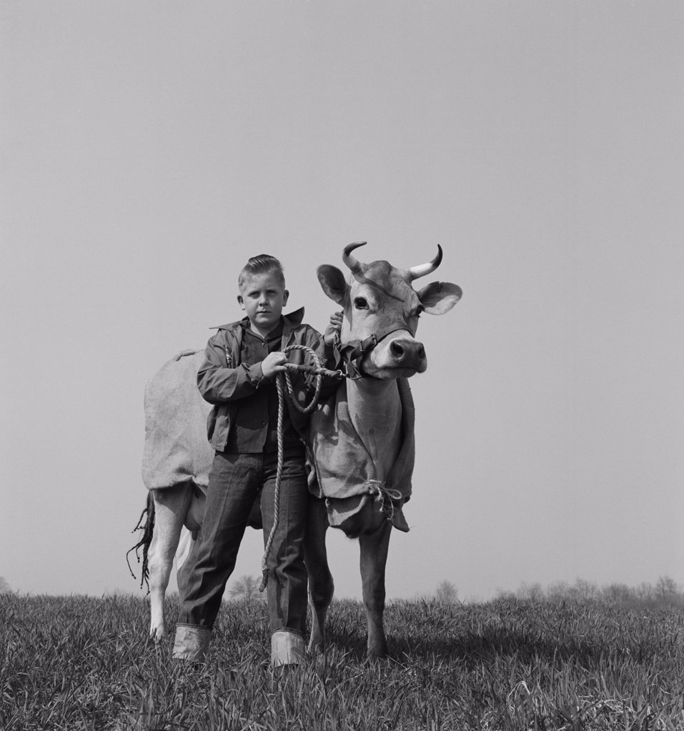 Stock Photo: 255-424942 Portrait of boy with cow in field