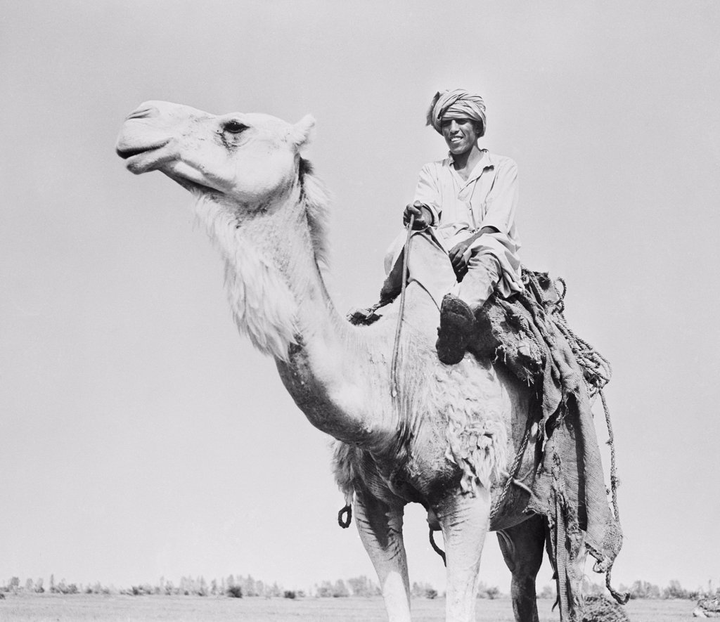 Stock Photo: 255-47820 Man riding camel