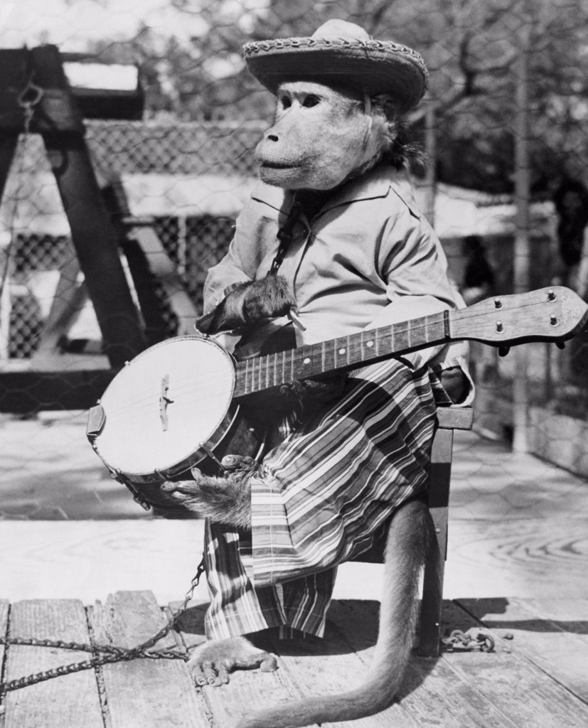 Monkey With A Banjo Stock Photo 255 50123 Superstock