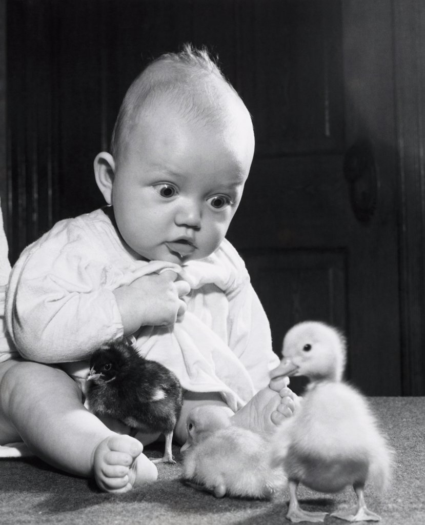Stock Photo: 255-5015 Close-up of a baby boy playing with three baby chicks