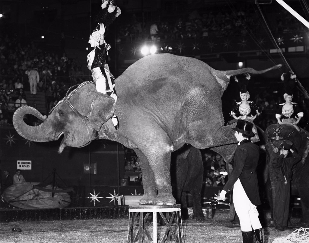 Elephants performing in a circus : Stock Photo