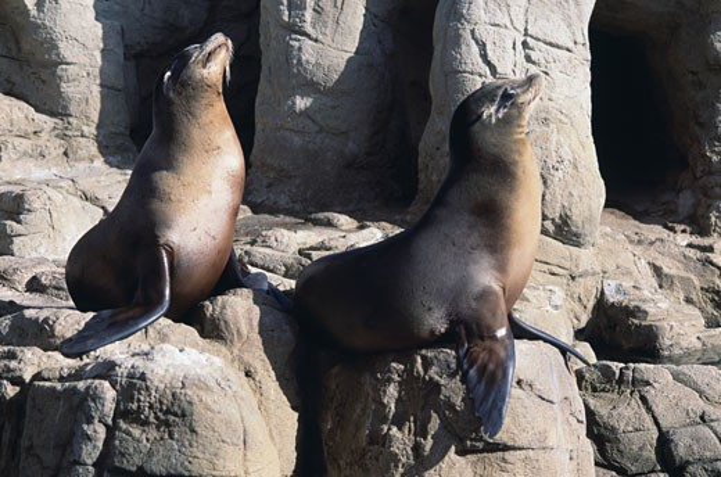 Stock Photo: 271-203B California Sea Lions Seaworld San Diego California USA