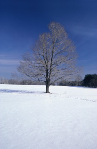 Stock Photo: 28-538D Winter