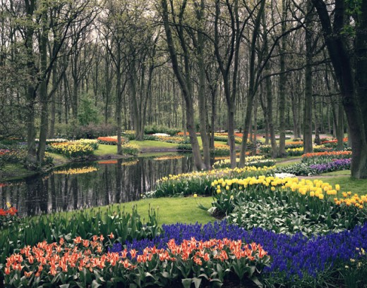 Stock Photo: 2860-602826 Keukenhof Gardens