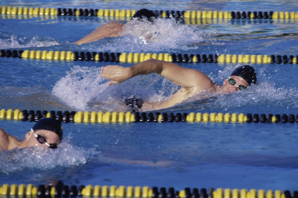 Stock Photo: 291-599A Three swimmers racing in a swimming pool