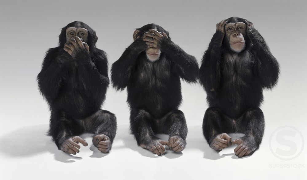 Stock Photo: 294-1168 Three chimpanzees sitting in a row covering their ears and eyes and mouth
