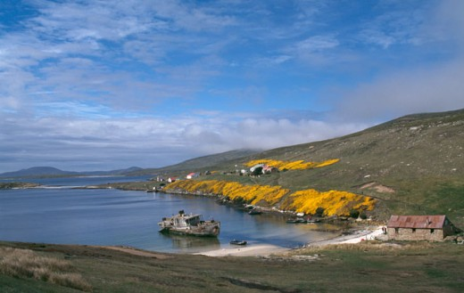 High angle view of a boat at the coast, Carcass Island, Falkland Islands : Stock Photo