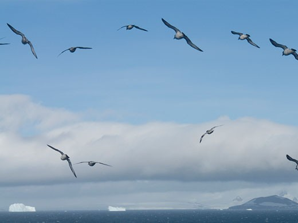 Stock Photo: 3138-705 Birds flying over icebergs, Bransfield Strait, Antarctica