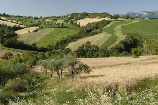 Stock Photo: 3153-578264 italy, marche, san ginesio countryside
