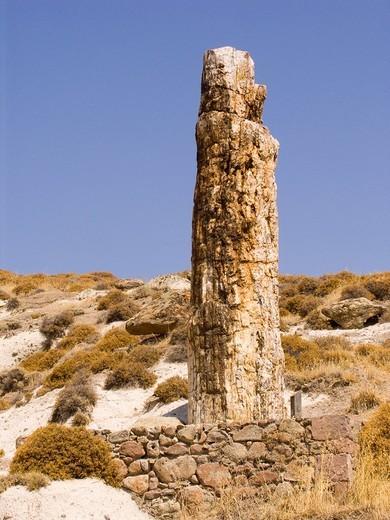 foresta pietrificata, isola di lesbo, egeo nord orientale, grecia : Stock Photo