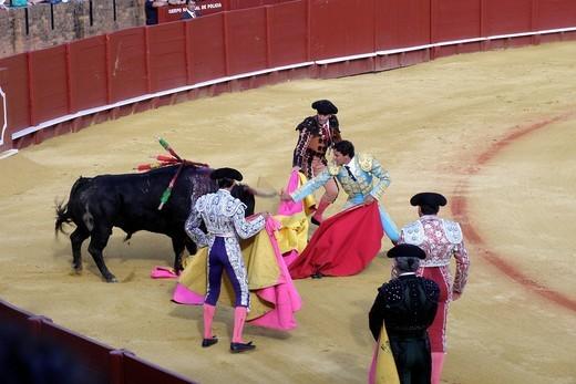 Stock Photo: 3153-582640 corrida, plaza de toros de la real maestranza, siviglia, spagna