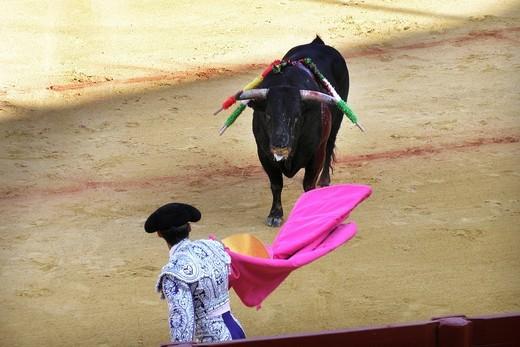 Stock Photo: 3153-582986 corrida, plaza de toros de la real maestranza, siviglia, spagna