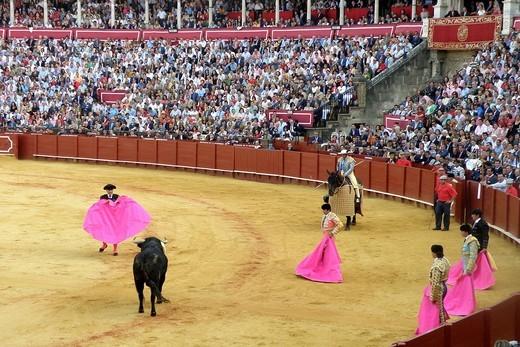 Stock Photo: 3153-582987 corrida, plaza de toros de la real maestranza, siviglia, spagna